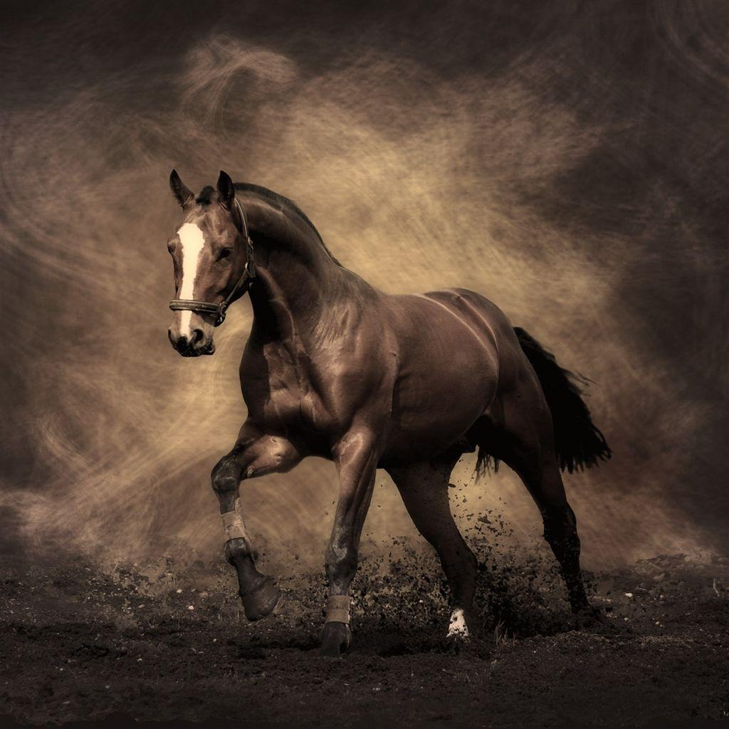 Running Horse Ipad Air Wallpaper Horse Wallpaper Horses Horse Painting