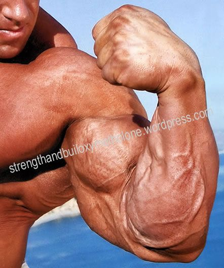 Anadrol Bulking Steroid Cycles For Competitive Bodybuilding