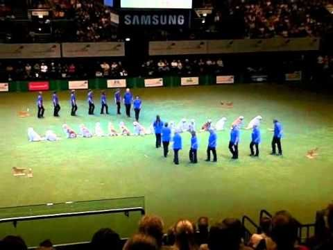 The Southern Golden Retriever Display Team Crufts 2010 Wmv Pet