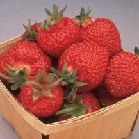 Eversweet™ Strawberry from Stark Bro's.  Estimated delivery Friday, April 1st .