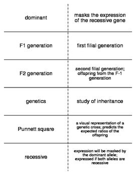 Genetics Vocabulary Flash Cards for Middle School Science ...