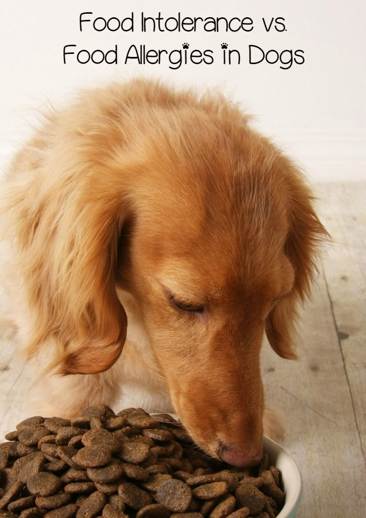 Food intolerance vs food allergies in dogs whats the
