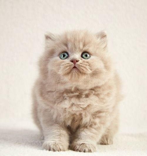 ℓσνє ιѕ ℓσυ∂єя | Cute animals, Cats and kittens, Pet ...