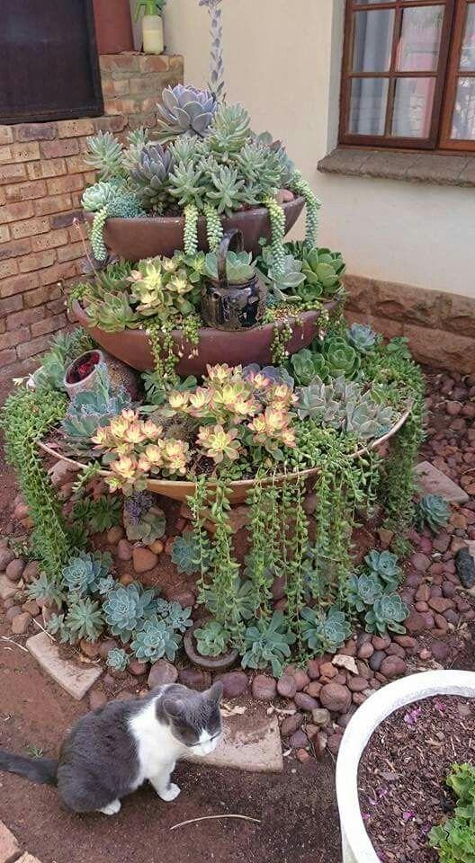Alter Brunnen neuer Garten für Sukkulenten. #alter #brunnen #garten #neu #s #fountaindiy