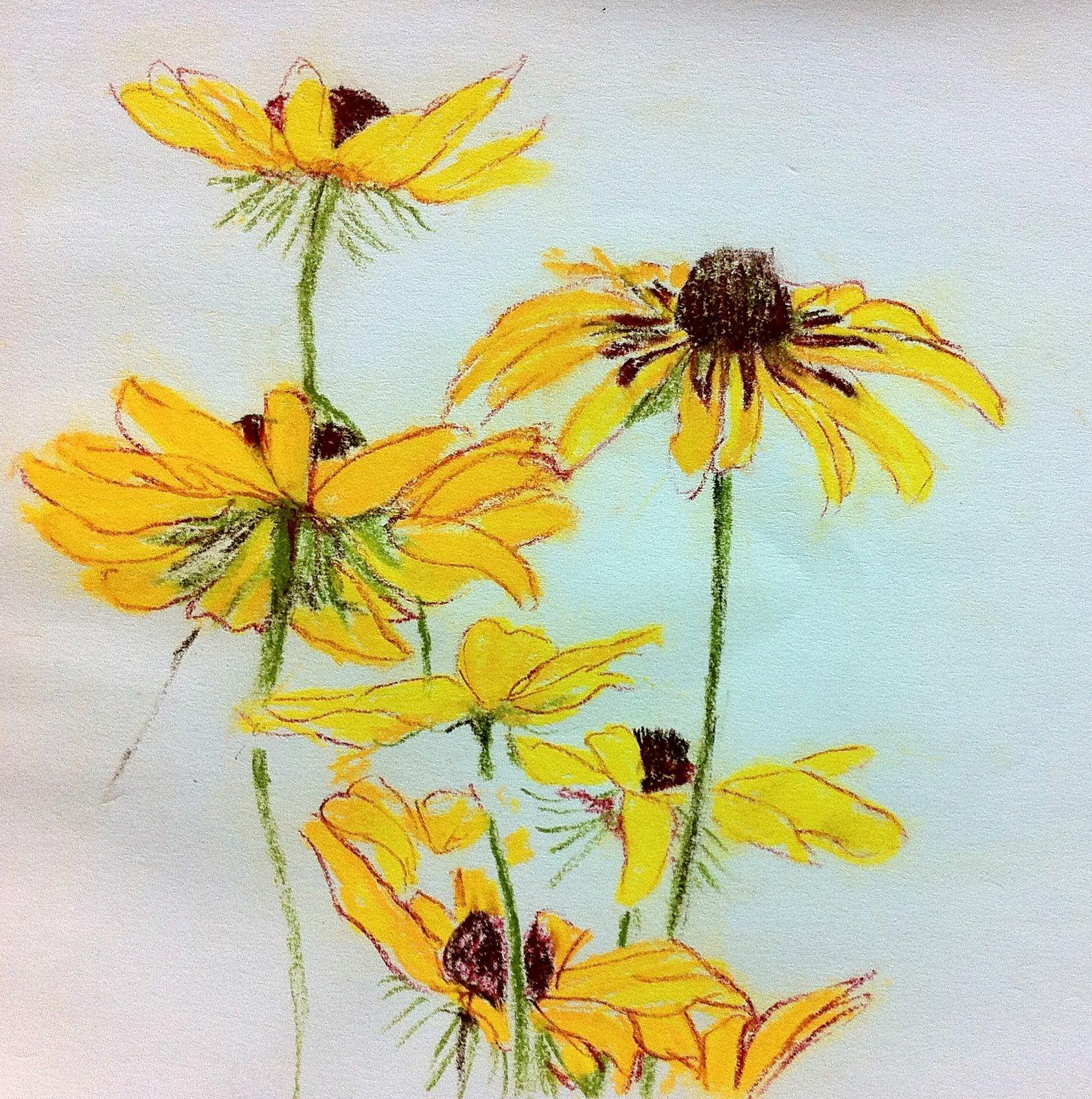 Colored Pencil Flower Drawings Drawing Sketch Ideas