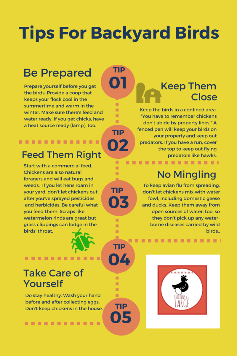 ogden u0027s ban on backyard chickens irks urban millennials chickens