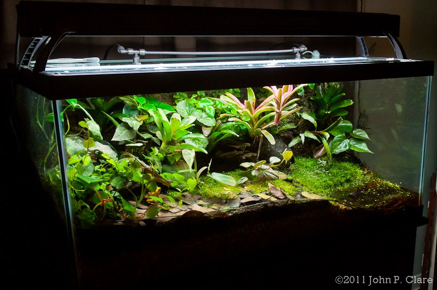 10 gallon fish tank terrariums for Fish tank terrarium