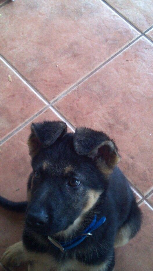 My little cone-head puppy, Kili :)