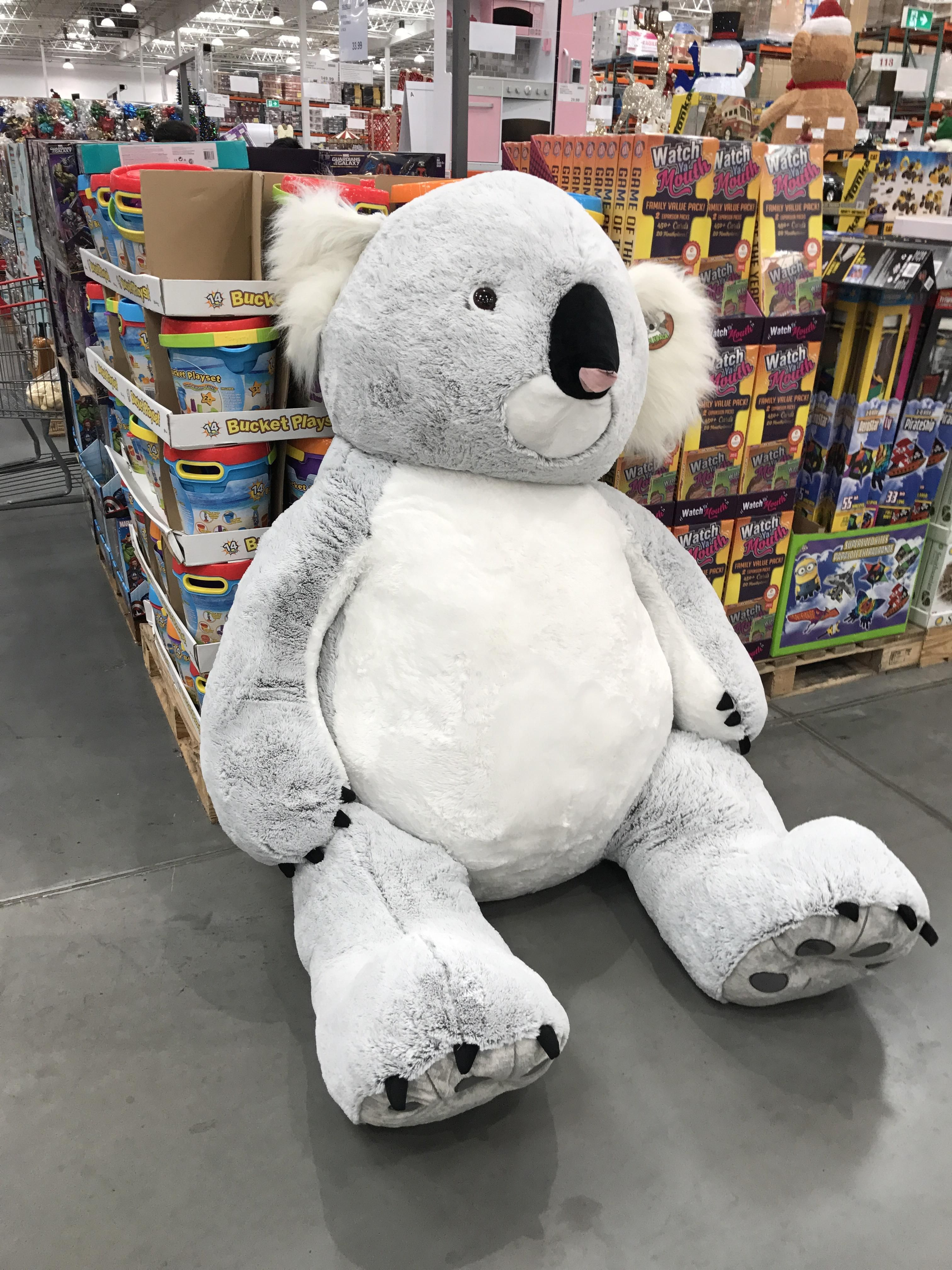Costco In Australia Has Giant Koalas As Well As The Usual Giant Bear