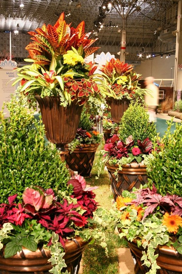 Experience For The Senses – Chicago Flower and Garden Show