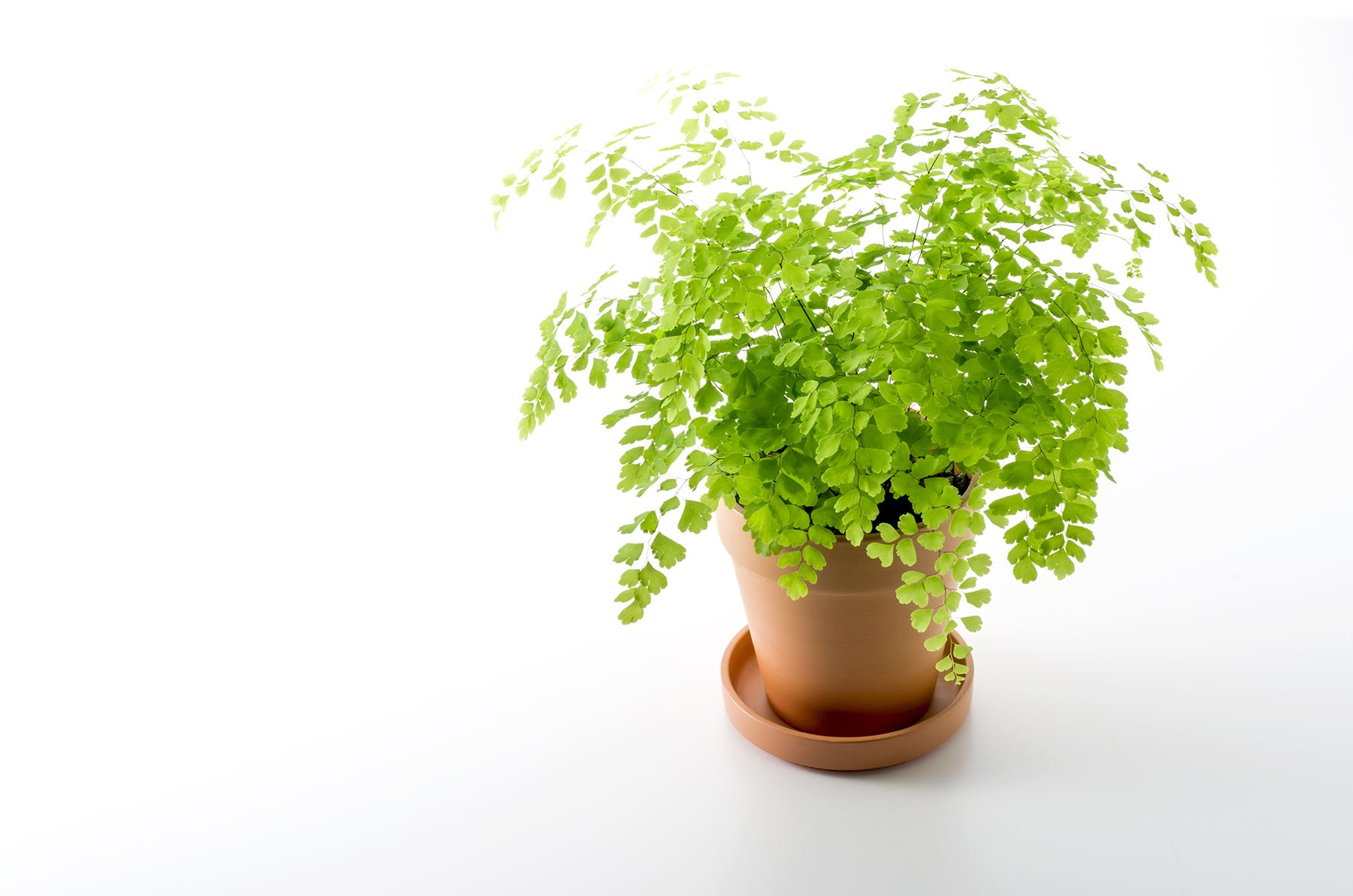 14 Hardy Houseplants That Will Survive The Winter Plants 400 x 300