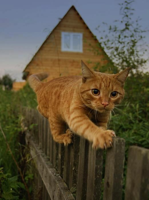 Tight Rope Fence Walking Cat Chats Et Chatons Chats Adorables Petit Felin