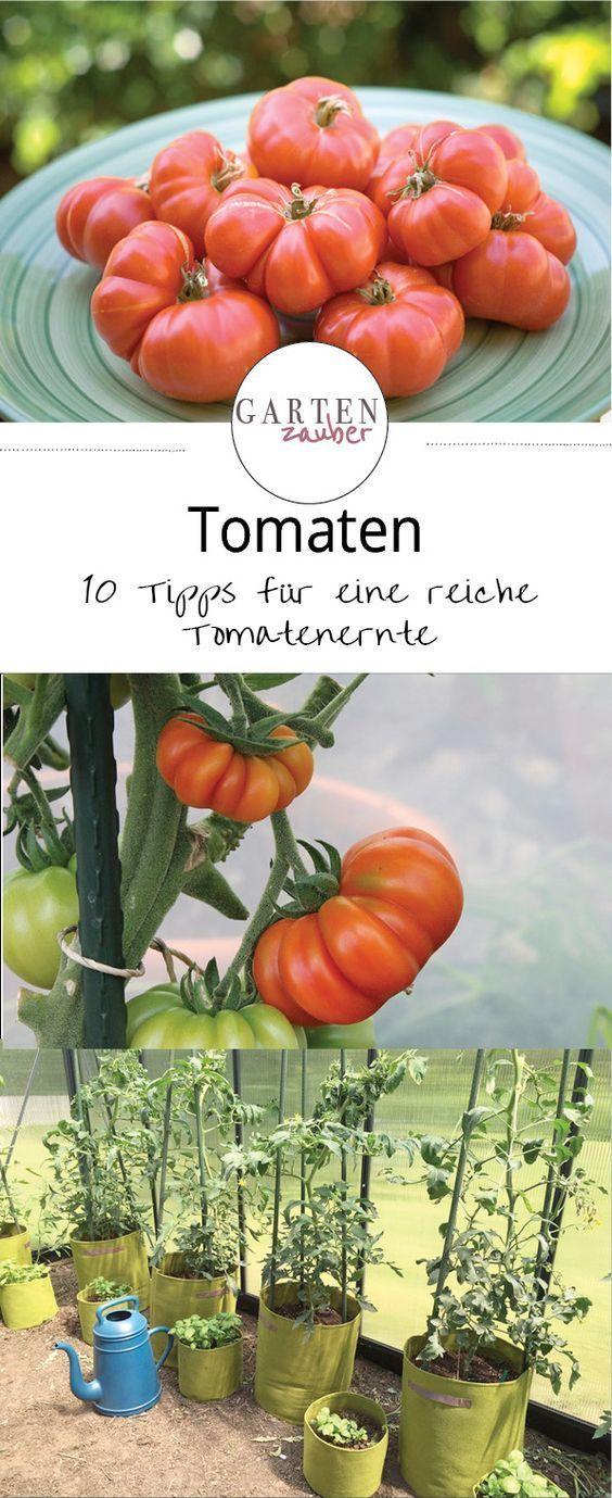 10 tipps f r eine reiche tomaten ernte garden pinterest garten ernte und tomaten. Black Bedroom Furniture Sets. Home Design Ideas