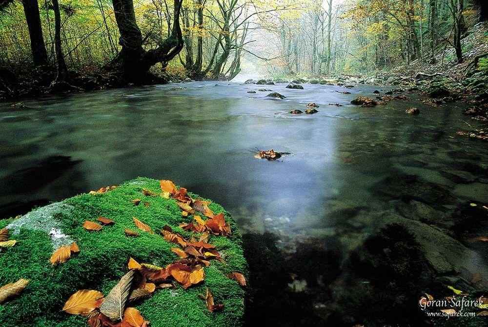 River Nature Croatia Croatia River Nature