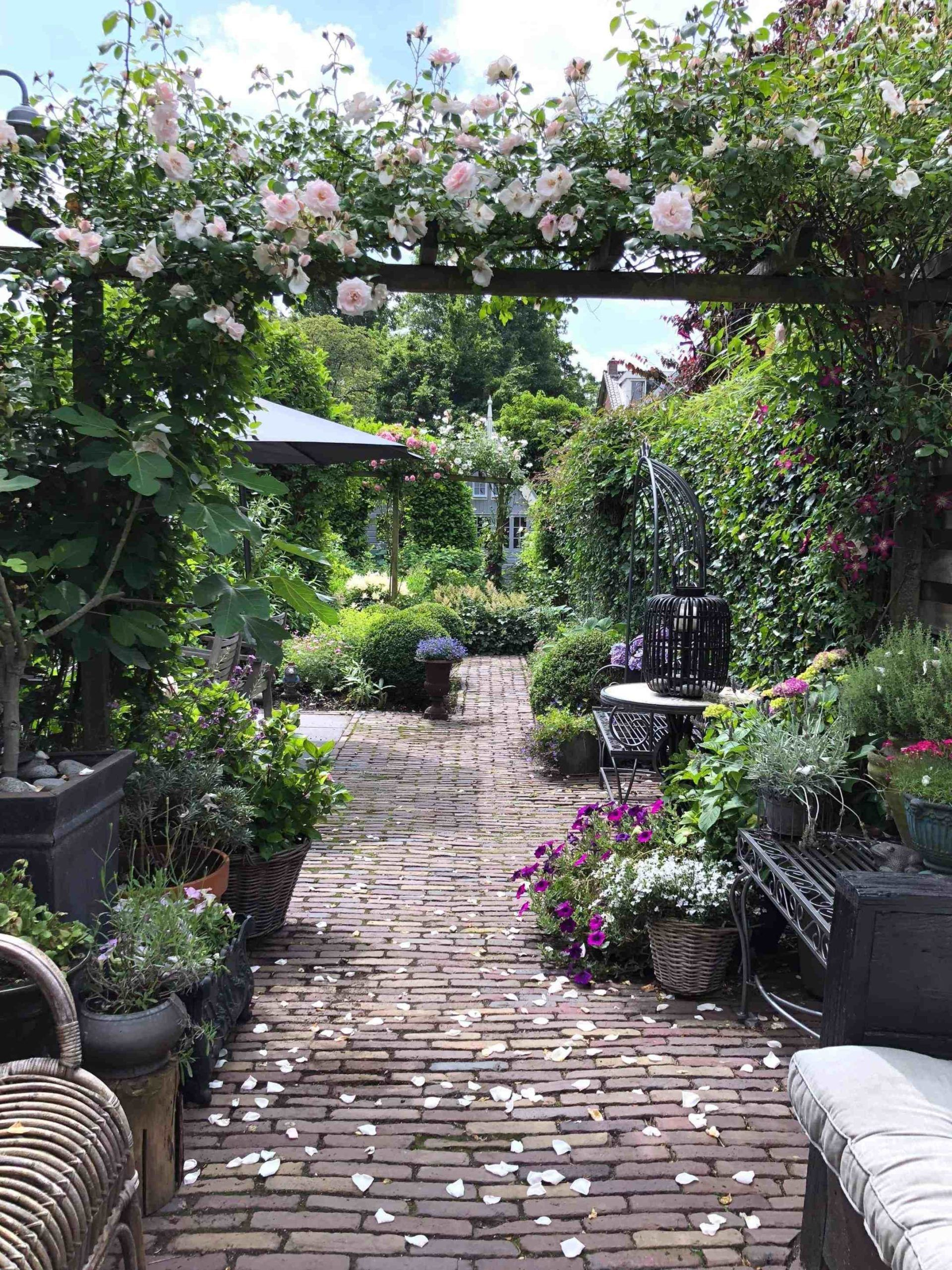 Instant kleur in de tuin (of op je balkon), zo doe je dat