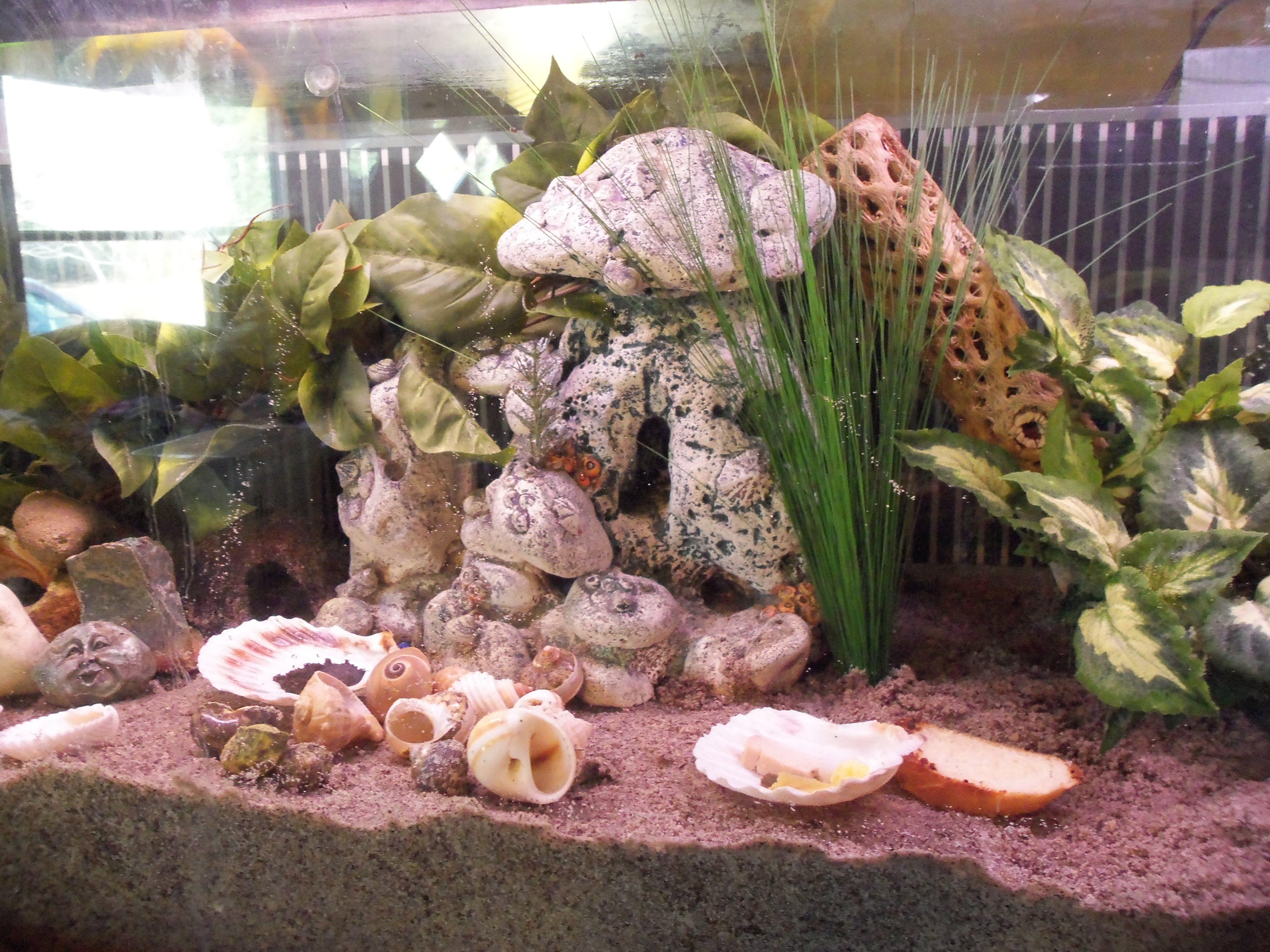 Nice crabitat hermit crabs tanks pinterest hermit crab habitat