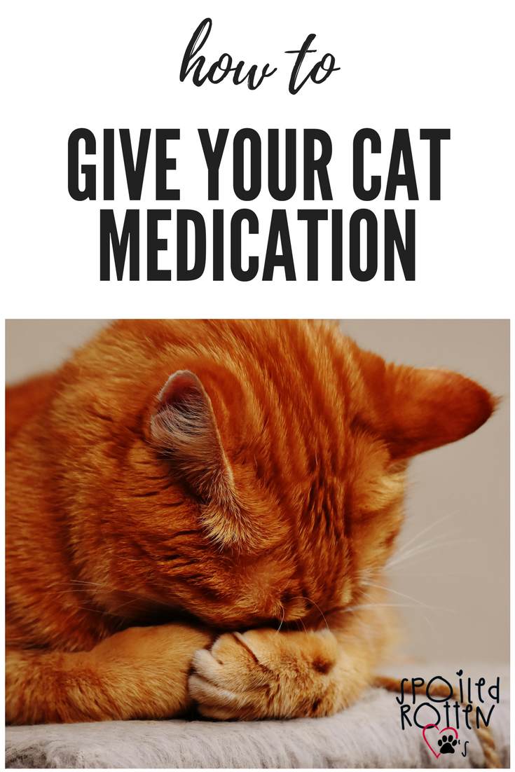 How To Give Your Cat Medication Spoiled Rotten Paws Cat Medication Cats Cat Health Care