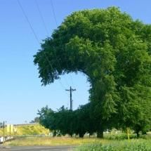 What electrical lines do to living things....