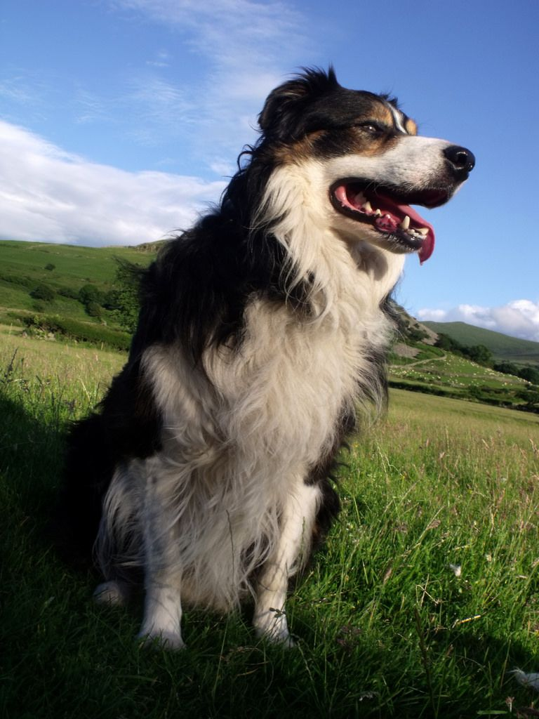 Out with laddie indie explore animals