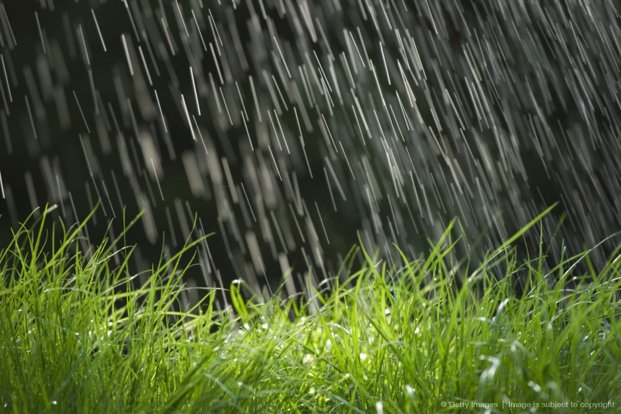 Falling Down Flowers Wallpaper Rain Falling On Grass Close Up Rain Rain Bonsai