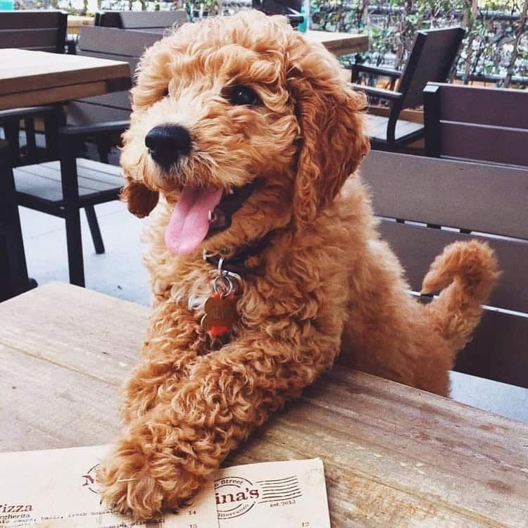 Untitled Cute Puppy Dog Animal Pets In 2020 Cute Animals Dog Pictures Cute Dogs