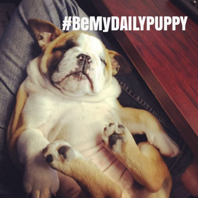 Entry in the Markr app #BeMyDailyPuppy Instagram promotion with dailypuppy and healthypetTX  #dog