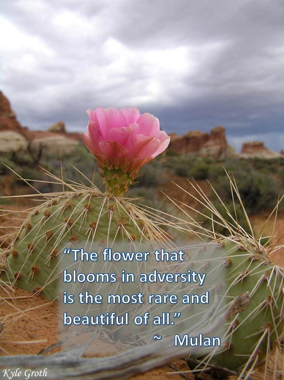 adversity desert flowers flowers
