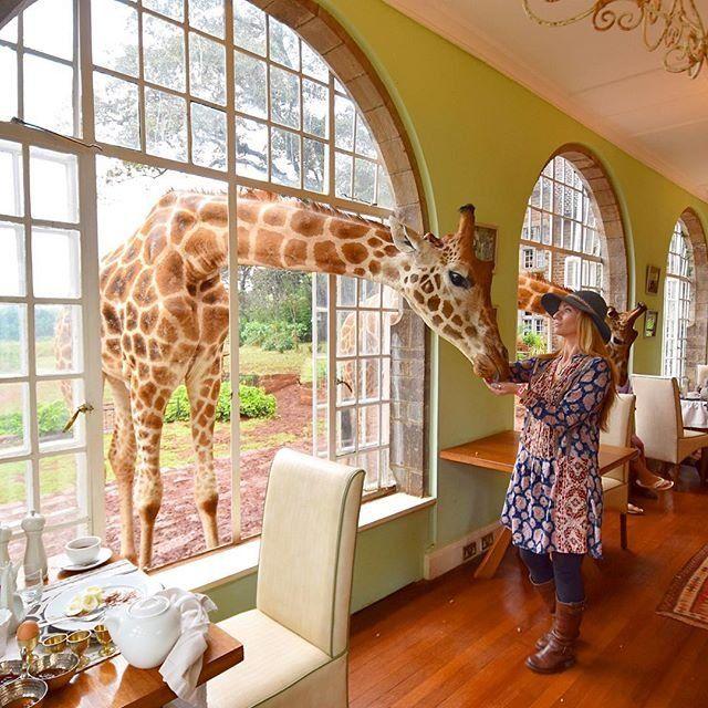 Stay at the Giraffe Manor in Nairobi