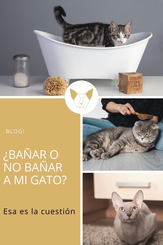 Pin En Conoce A Tus Gatos