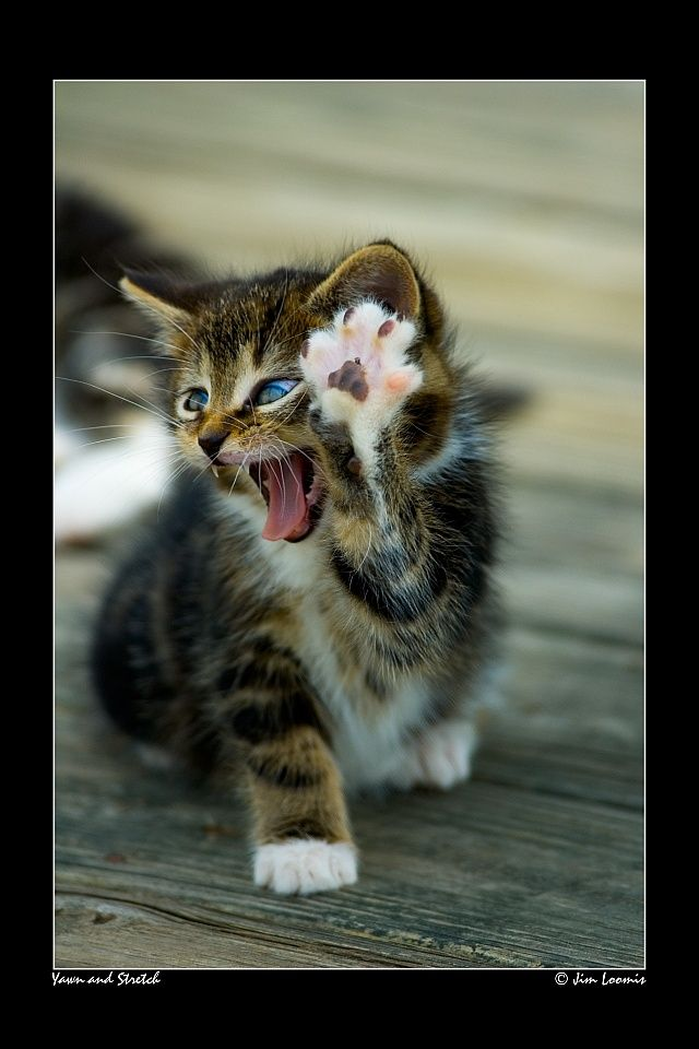 Yawn and Stretch by ~jimloomis