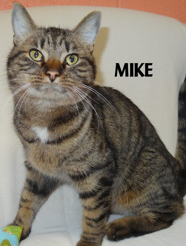 Michigan 20 adoption fee is waived available now