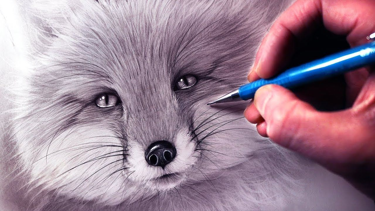 How To Draw A Fox Using Pencil And Graphite Step By Step Tutorial Art Draw Drawings Pencil Drawing Tutorials Fox Pencil Drawing Pencil Drawings Of Animals
