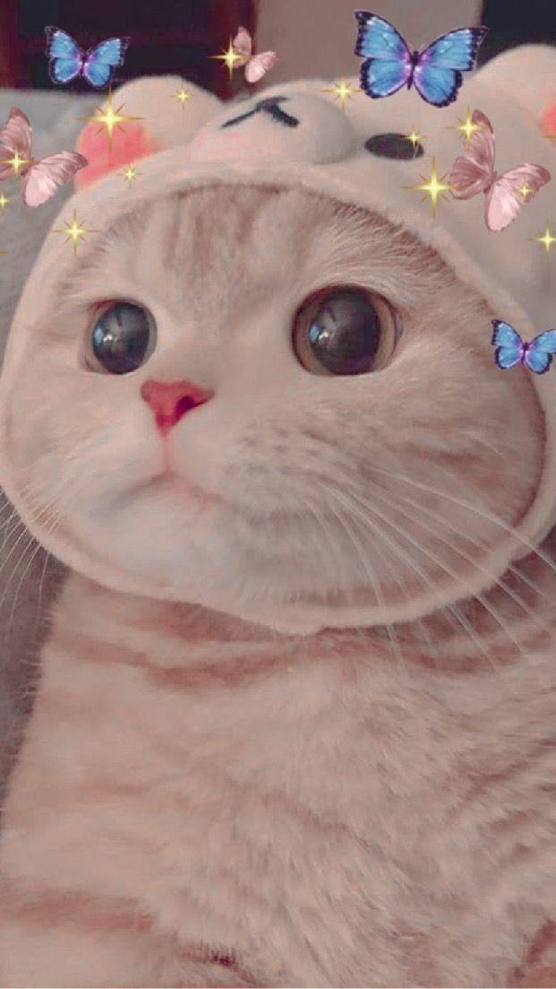 Cato cute
