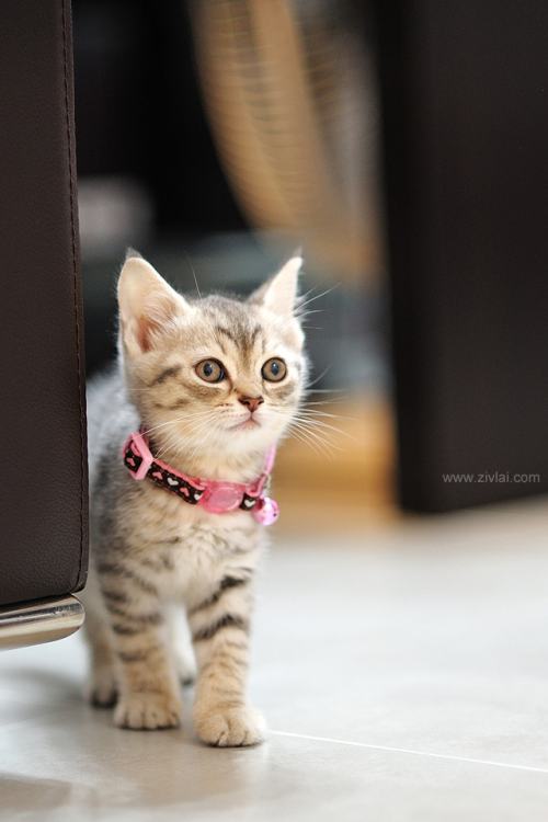 yes, yes, yes, I am cute, everybody is always saying that cute word, I am sick of it, do you hear me???
