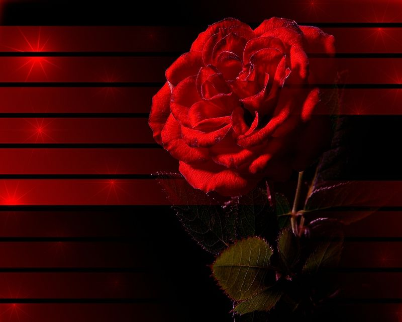3d Abstract Red Rose Nature Flowers Hd Wallpaper Abstract Wallpaper Red Roses Wallpaper