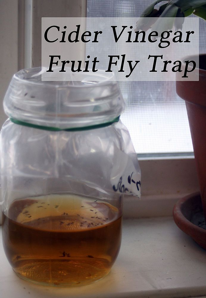 Making a Fruit Fly Trap From Cider Vinegar | Keep Flies Away | Fruit