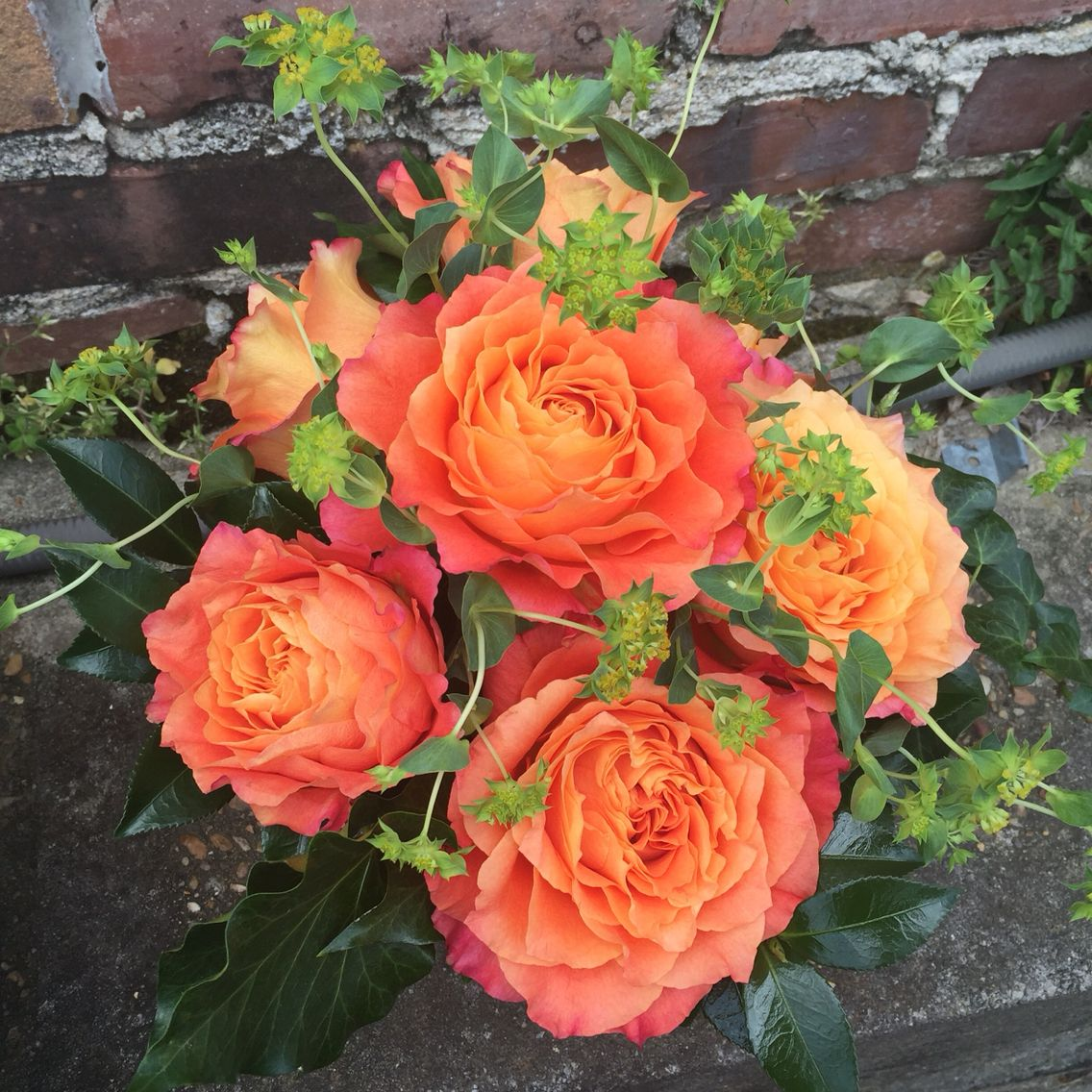 In love with these Free Spirit roses! Everyday