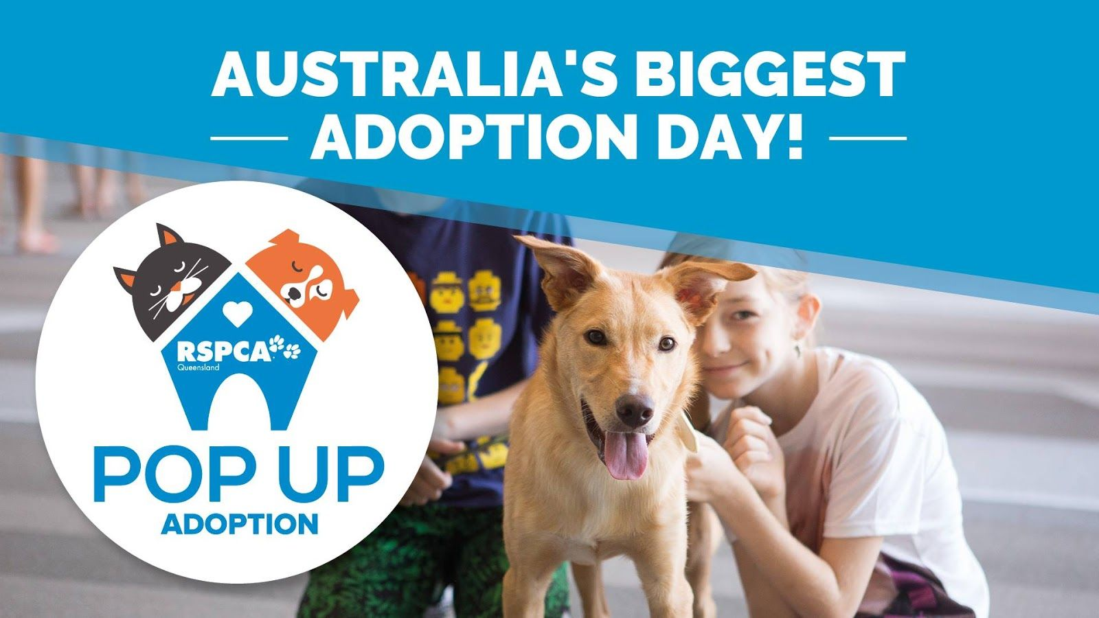 RSPCA Queensland PopUp Adoption 2018 January 13