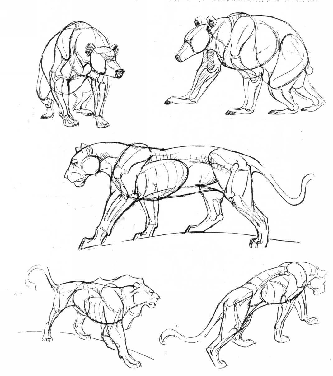 25 Beautiful Animal Drawings For Your Inspiration