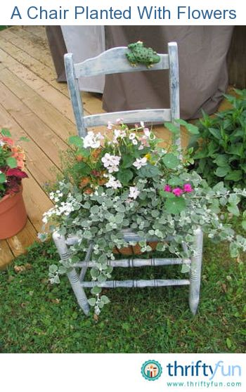 Enjoy Gardening Without The Breaking Your Back With This: Old Chair For Container Gardening