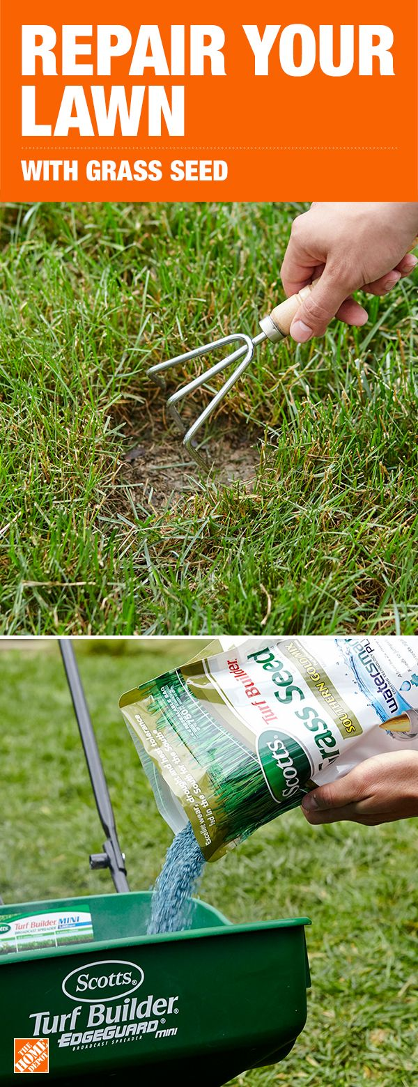 Inspirational Home Depot Grass Seed