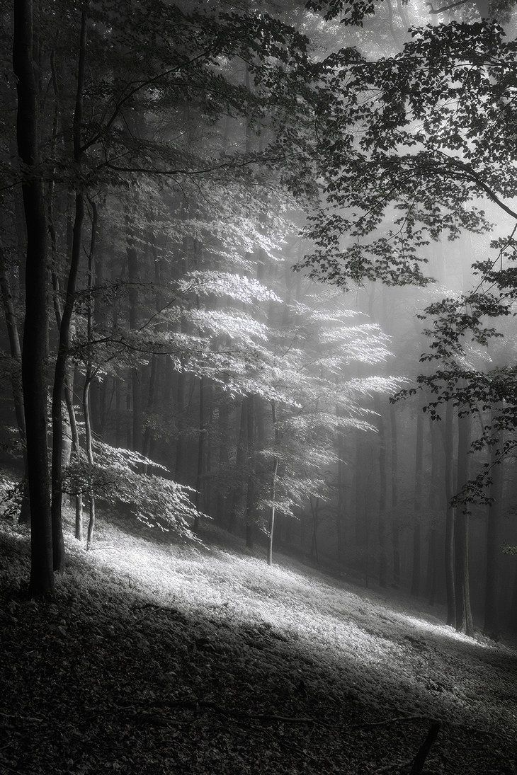 Fog in june mono photography by fremdart