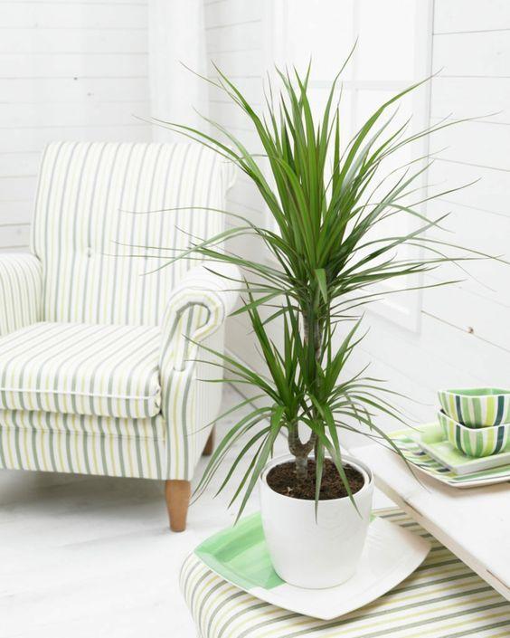 Zimmerpflanzen Für Schatten 10 schattenpflanzen für die dunkelsten ecken zu hause