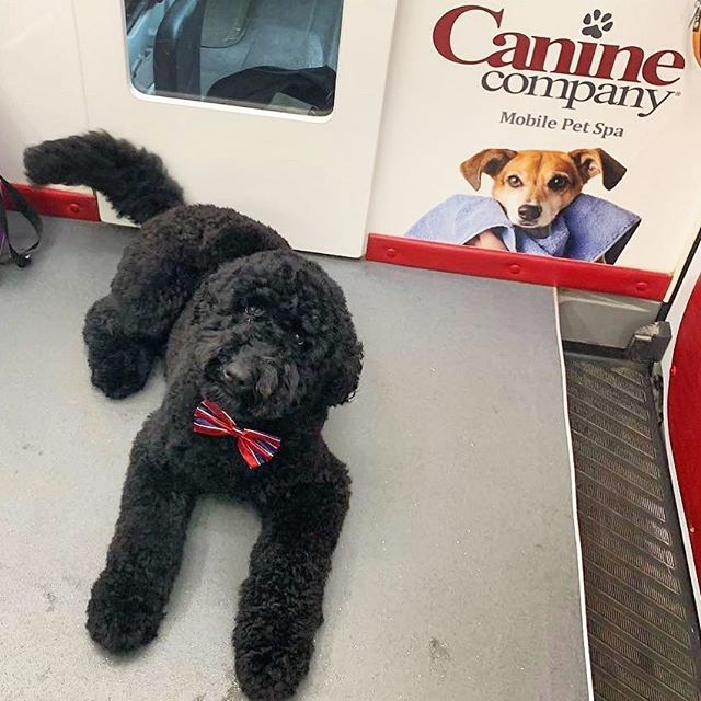 Handsome Toby After His #mobilegrooming 😍🐾😊 #mobilepetspa
