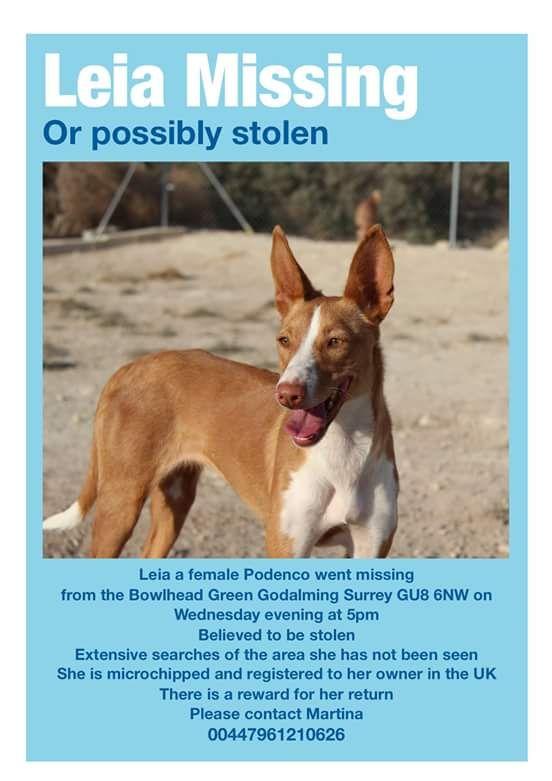 @DoglostUK *LOST DOG* Please RT; REWARD! @DogsTrust @DogRescueTweets @mutt_butts @ediesausage @Dogs_Today