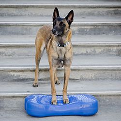 Dog Strength Training Supplies Dog Health Senior Dog Dog Show