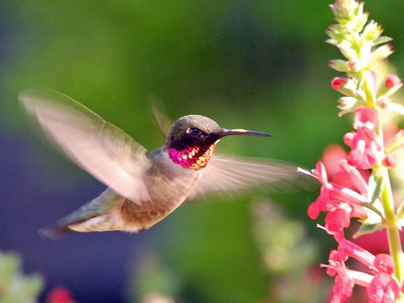 aves exoticas pesquisa google aves e passaros pinterest