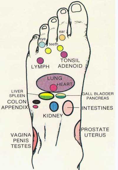 Las partes del cuerpo reflejadas en los pies..........Modern ...