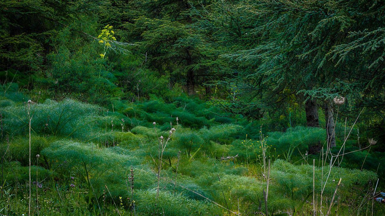 غابة تازارين من غابات الاطلس البليدي منتديات الشروق أونلاين Country Roads Natural Landmarks Forest