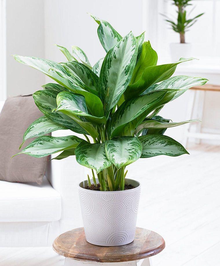Piante Verdi Da Appartamento.Pianta Da Appartamento 4 Idee Anche Per Chi Non Ha Il Pollice